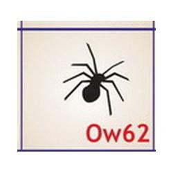 0062 Owady