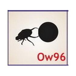0096 Owady